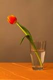 Tulipan w szklanej wazie fotografia stock