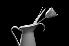 Tulipan w wazie czarny i biały Zdjęcie Stock