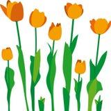 Tulipanes Stock Photo