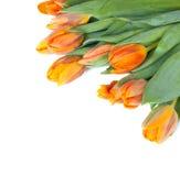 Tulipanes fotos de archivo libres de regalías