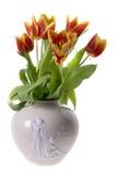 Tulipanes aislados fotografía de archivo
