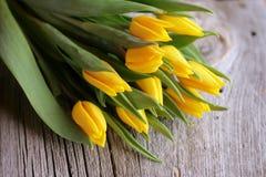 Tulipanes amarillos Imágenes de archivo libres de regalías