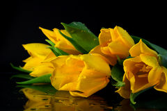 Tulipanes amarillos Fotografía de archivo libre de regalías