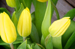 Tulipanes amarillos Fotos de archivo libres de regalías