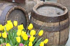 Tulipanes amarillos cerca de barriles de madera viejos Fotos de archivo