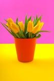 Tulipanes amarillos coloridos Imágenes de archivo libres de regalías