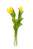 Tulipanes amarillos de la primavera Imagenes de archivo