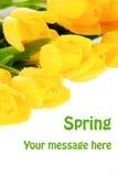 Tulipanes amarillos del resorte Imagen de archivo