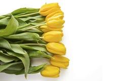 Tulipanes amarillos en blanco Fotografía de archivo