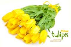 Tulipanes amarillos en el fondo blanco Imagen de archivo libre de regalías