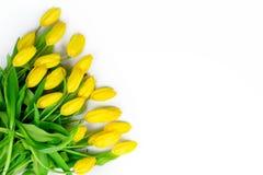 Tulipanes amarillos en el fondo blanco, espacio vacío para su texto, tema del día de fiesta imagen de archivo