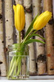 Tulipanes amarillos en el fondo de madera Imágenes de archivo libres de regalías