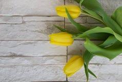 Tulipanes amarillos en la piedra blanca Imagen de archivo