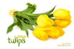 Tulipanes amarillos en un blanco Imagen de archivo libre de regalías