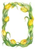 Tulipanes amarillos, guirnalda Imagenes de archivo