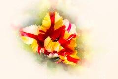 Tulipanes amarillos rojos y fondo suavemente borroso de la acuarela Imagenes de archivo