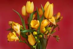 Tulipanes amarillos y fresias fotografía de archivo