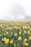 Tulipanes amarillos y un árbol Imágenes de archivo libres de regalías