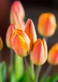 Tulipanes anaranjados Imagen de archivo
