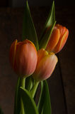 Tulipanes anaranjados Fotografía de archivo