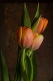Tulipanes anaranjados Foto de archivo libre de regalías