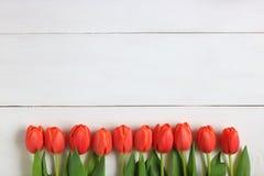 Tulipanes anaranjados exhibidos en un fondo blanco Imágenes de archivo libres de regalías