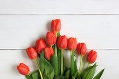 Tulipanes anaranjados exhibidos en un fondo blanco Imagen de archivo