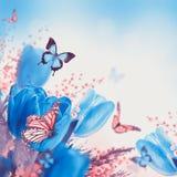 Tulipanes azules con la mimosa y la mariposa Imagen de archivo libre de regalías