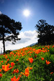 Tulipanes bajo el sol fotos de archivo