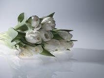 Tulipanes blancos Imágenes de archivo libres de regalías