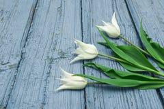 Tulipanes blancos en el fondo de madera, Pascua, el día del ` s de la madre Fotos de archivo