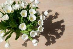 Tulipanes blancos en el sol Foto de archivo libre de regalías