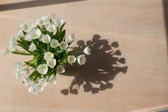 Tulipanes blancos en el sol Imágenes de archivo libres de regalías