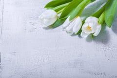 Tulipanes blancos en la tabla de madera Fotos de archivo