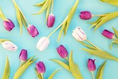 Tulipanes blancos y p?rpuras imagen de archivo