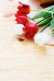 Tulipanes blancos y rojos Fotos de archivo