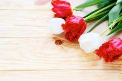 Tulipanes blancos y rojos en los tableros Imagenes de archivo