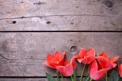 Tulipanes brillantes de la primavera en fondo de madera del vintage Imagenes de archivo