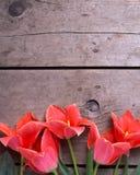 Tulipanes brillantes de la primavera en fondo de madera del vintage Fotos de archivo