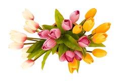 Tulipanes coloridos aislados Imágenes de archivo libres de regalías