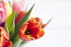 Tulipanes coloridos de pascua de la primavera en el fondo blanco del vintage Fotos de archivo libres de regalías