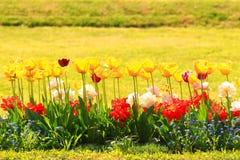 Tulipanes coloridos en el jardín botánico, Zagreb, Croacia fotos de archivo