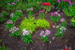 Tulipanes coloridos en el parque Imágenes de archivo libres de regalías