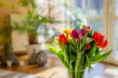 Tulipanes coloridos en la luz del sol Fotos de archivo libres de regalías
