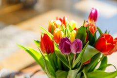 Tulipanes coloridos en la luz del sol Imagenes de archivo