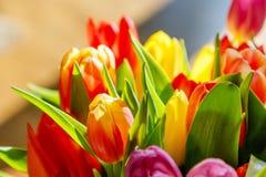 Tulipanes coloridos en la luz del sol Imagen de archivo libre de regalías