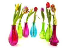 Tulipanes coloridos en los floreros de cristal Fotografía de archivo libre de regalías