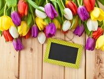 Tulipanes coloridos en primavera Imagen de archivo libre de regalías