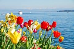 Tulipanes coloridos en resorte Fotografía de archivo
