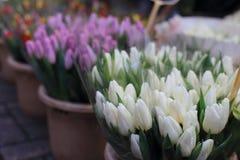Tulipanes coloridos en venta en el mercado de la flor de Amsterdam, Países Bajos Foto de archivo